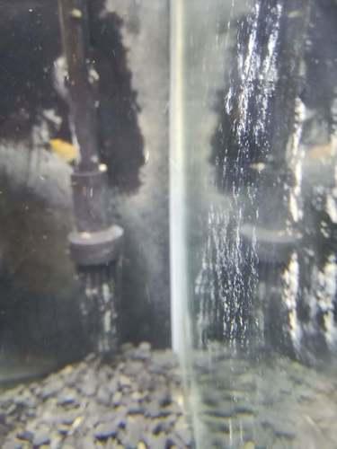 石灰藻漂白クエン酸処理.jpg